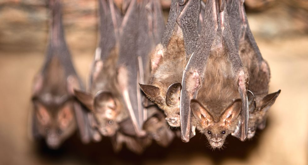 Bats help grow our crops, but climate change has them on the move