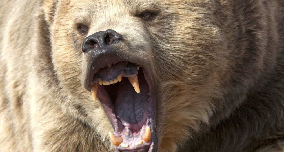 Montana elk hunter survives run-in with grizzly by sticking arm into bear's throat
