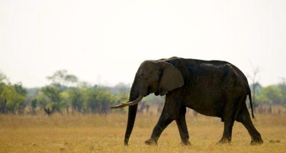 Online skin trade fuels Myanmar elephant slaughter: conservation group
