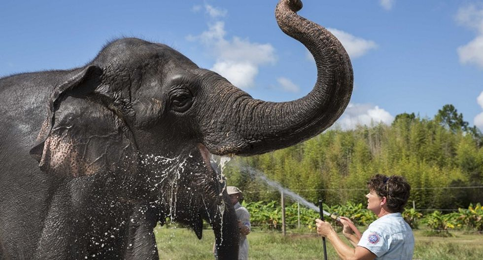 Retired Florida circus elephants find careers helping researchers understand how to save the dwindling species