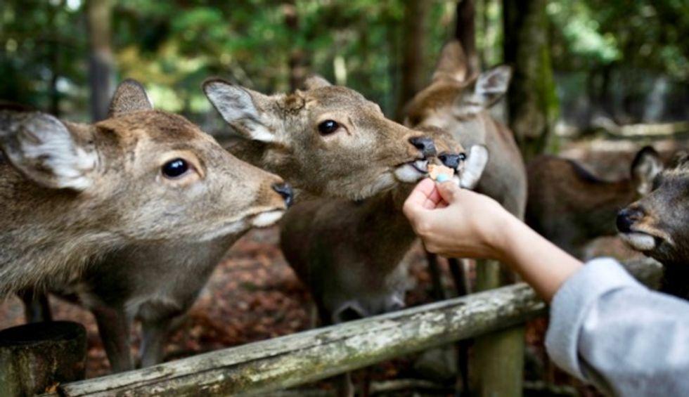 Nine deer dead in Japan after eating plastic: wildlife group