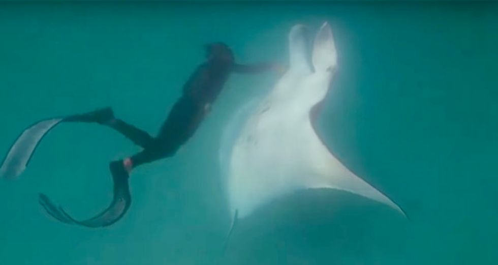 Off the hook: Manta ray asks divers for helping hand
