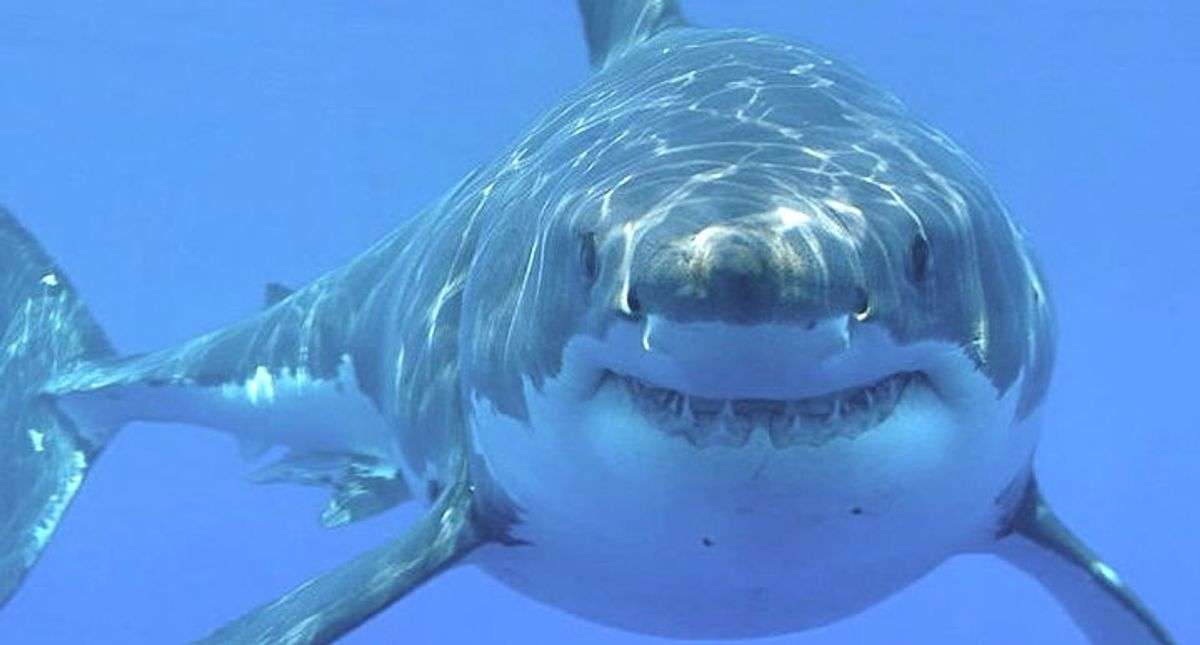 Nature's GPS: Sharks read magnetic fields for directions