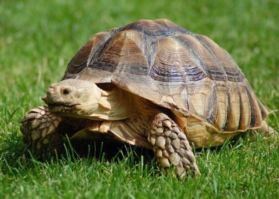 Herbivores face higher extinction risk than predators: study
