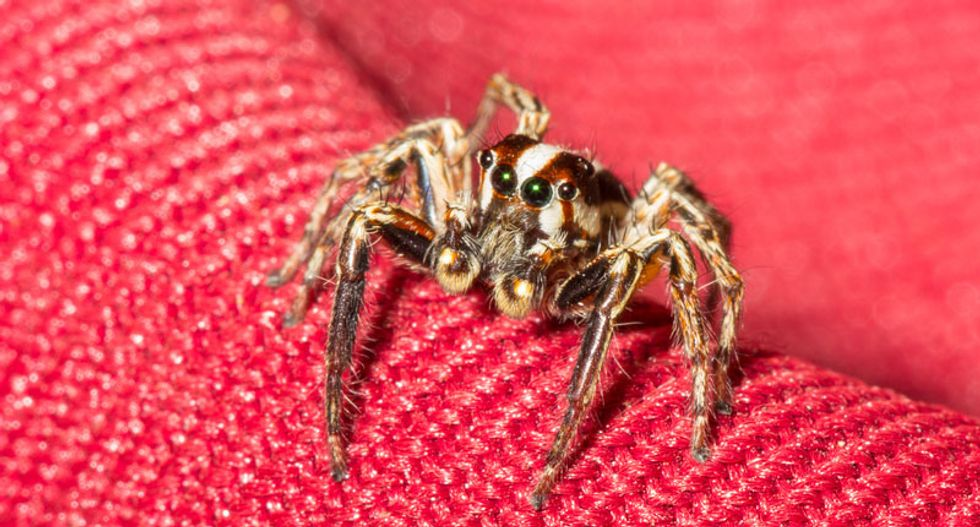 Hundreds of types of spiders, lice and more crawling through US homes: study