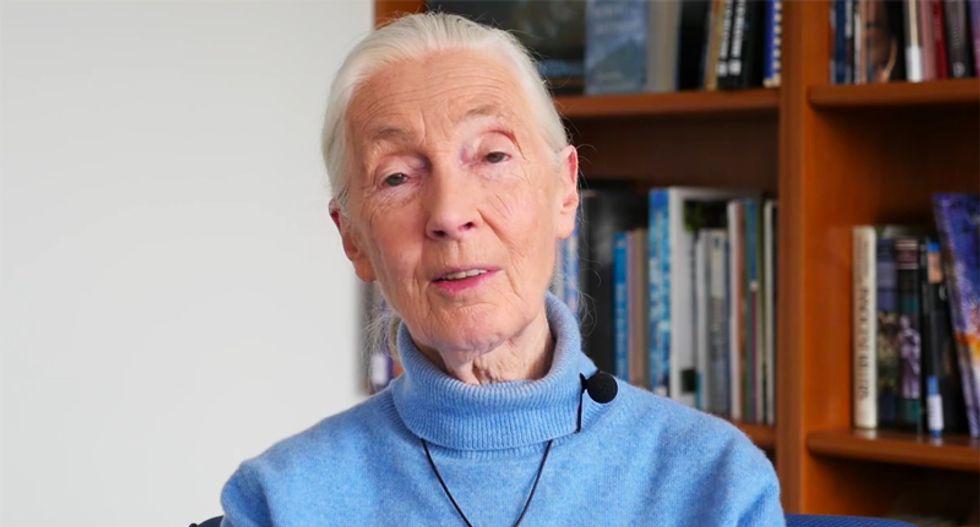 Jane Goodall urges US Senate to halt push to drill in Arctic refuge