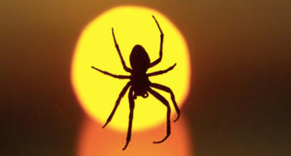 Here's why you shouldn't kill spiders in your home — according to science