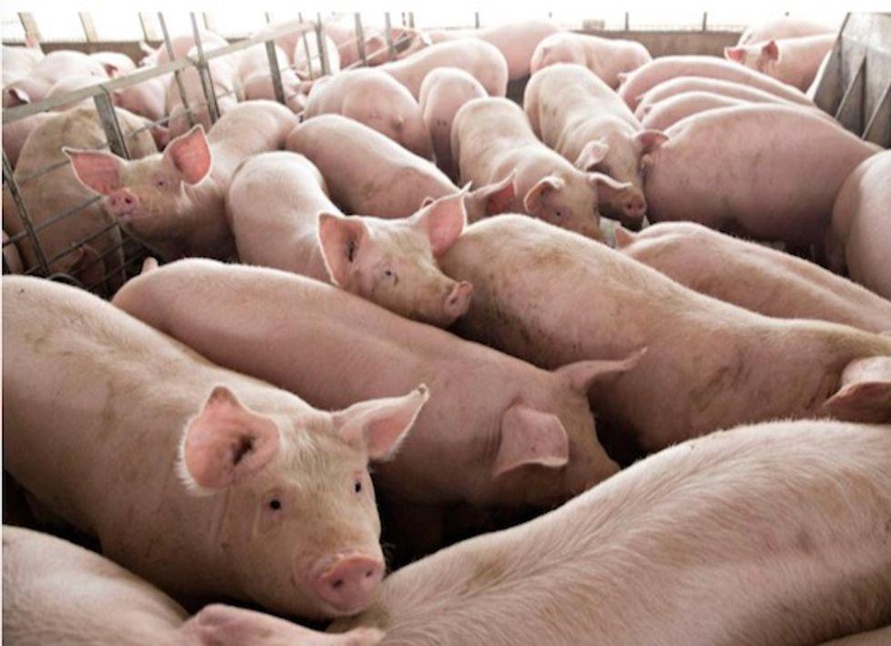 Canada reports rare strain of swine flu found in a human