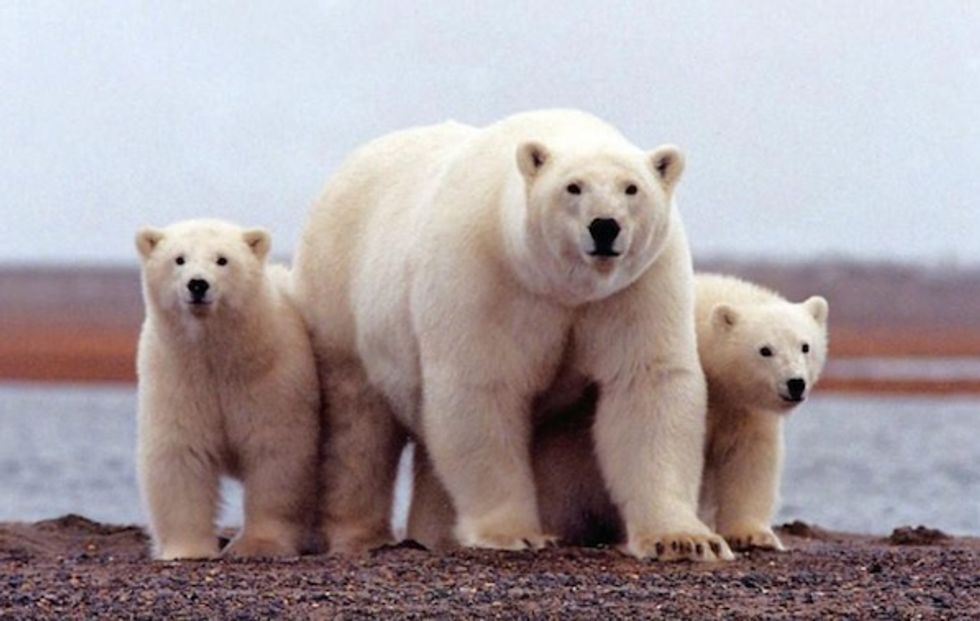 Construction planned to prepare Alaska's Arctic refuge for oil drilling