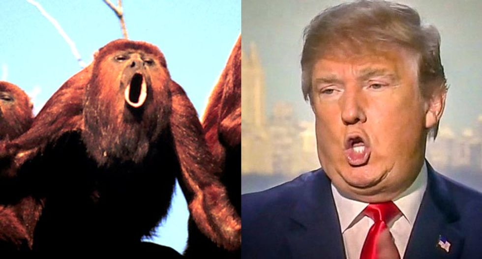 Science explains Trump? Monkeys with smaller 'sexual weaponry' compensate with louder howls