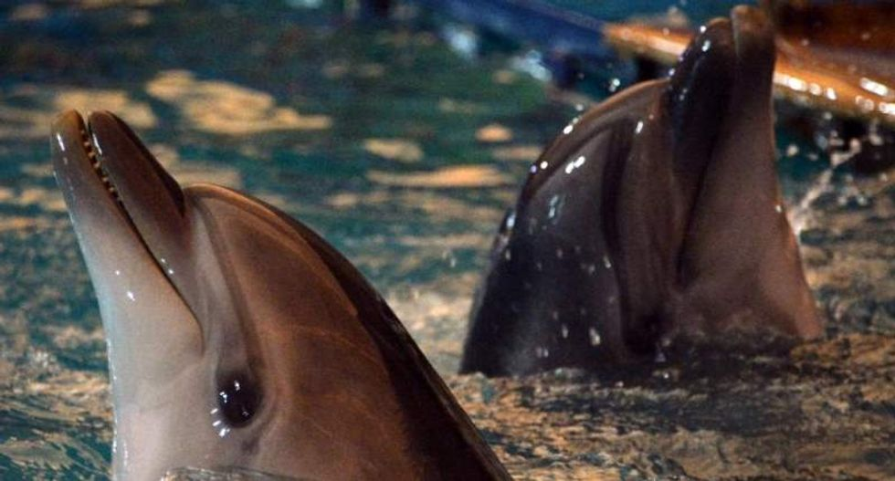 Russian defense officials shopping for five combat dolphins