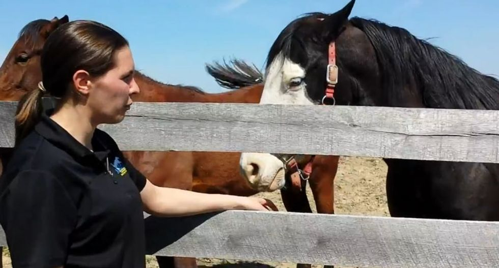 Horses are being born without the ability to swallow -- and fracking could be to blame