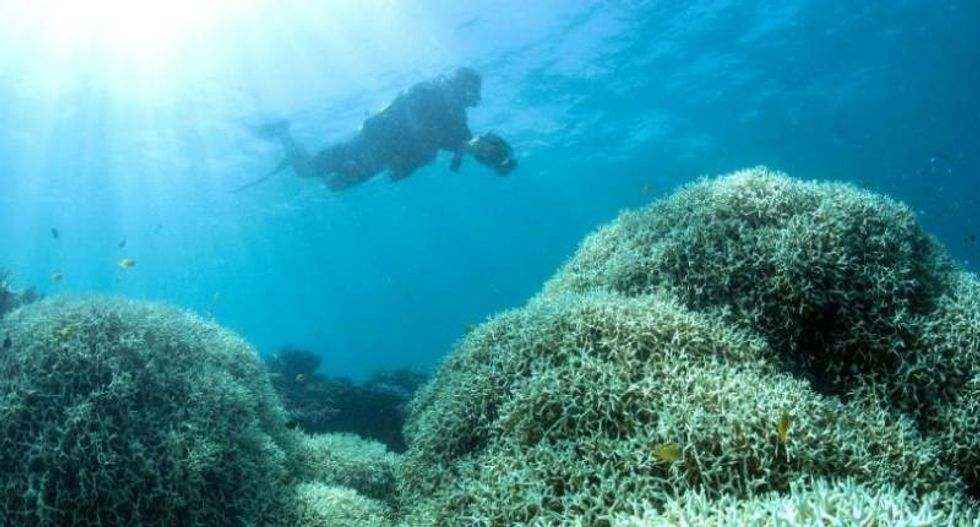 Scientists just confirmed the Great Barrier Reef bleached an unprecedented second year in a row