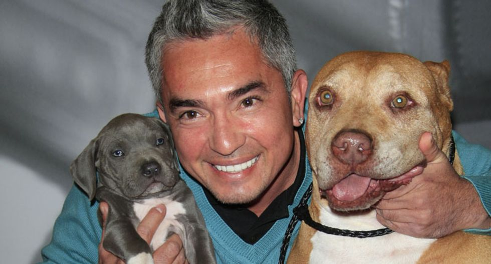 'Dog Whisperer' Cesar Millan cleared in probe over cruelty to a pig