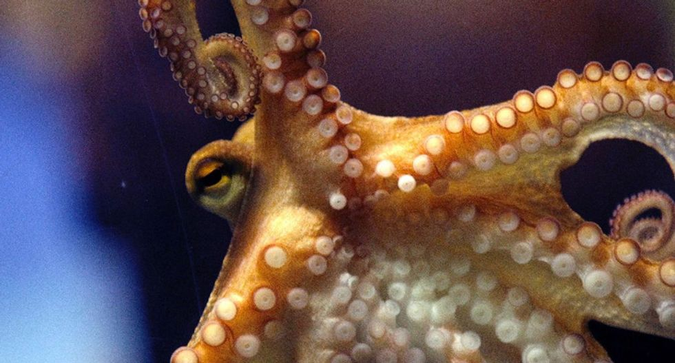 Inky the octopus makes great escape from New Zealand aquarium