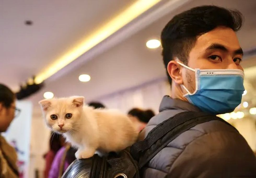 Can your pets get coronavirus, and can you catch it from them?