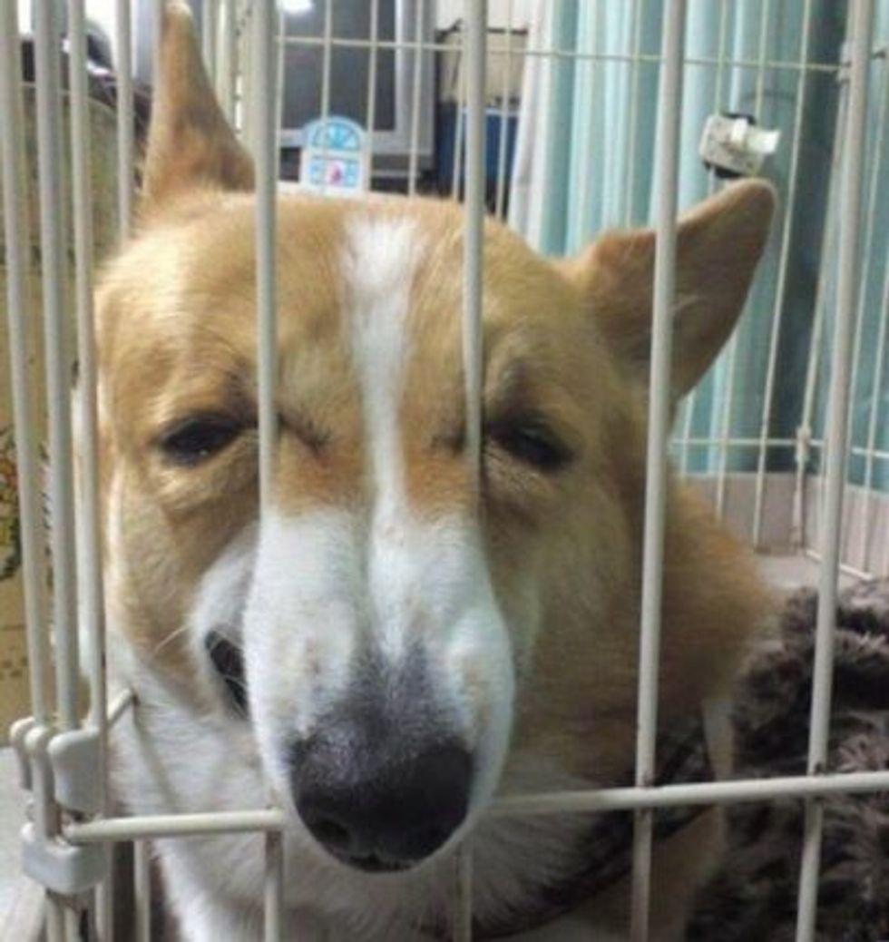 dog that looks like ted cruz