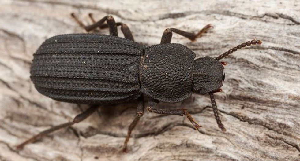 Los Angeles has enjoyed the same amazing climate for 50,000 years -- according to beetles