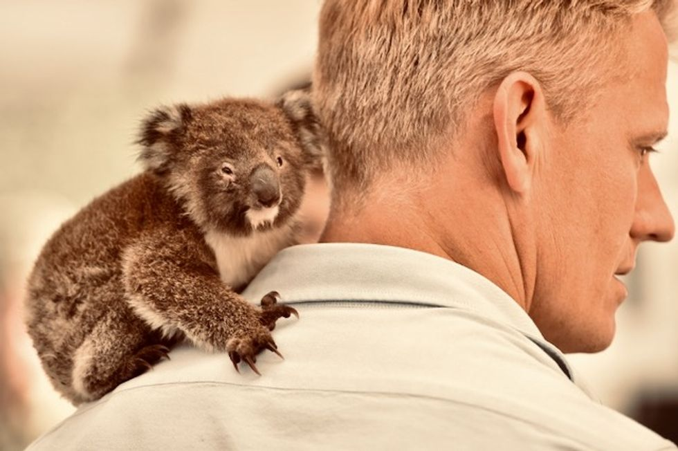 Makeshift koala hospital scrambles to save dozens injured in bushfires