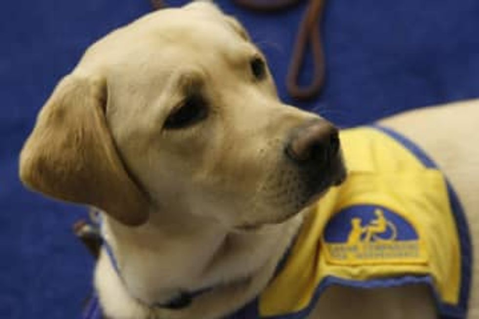 Emotional support animals would lose flying privileges under new proposed rules on service animals