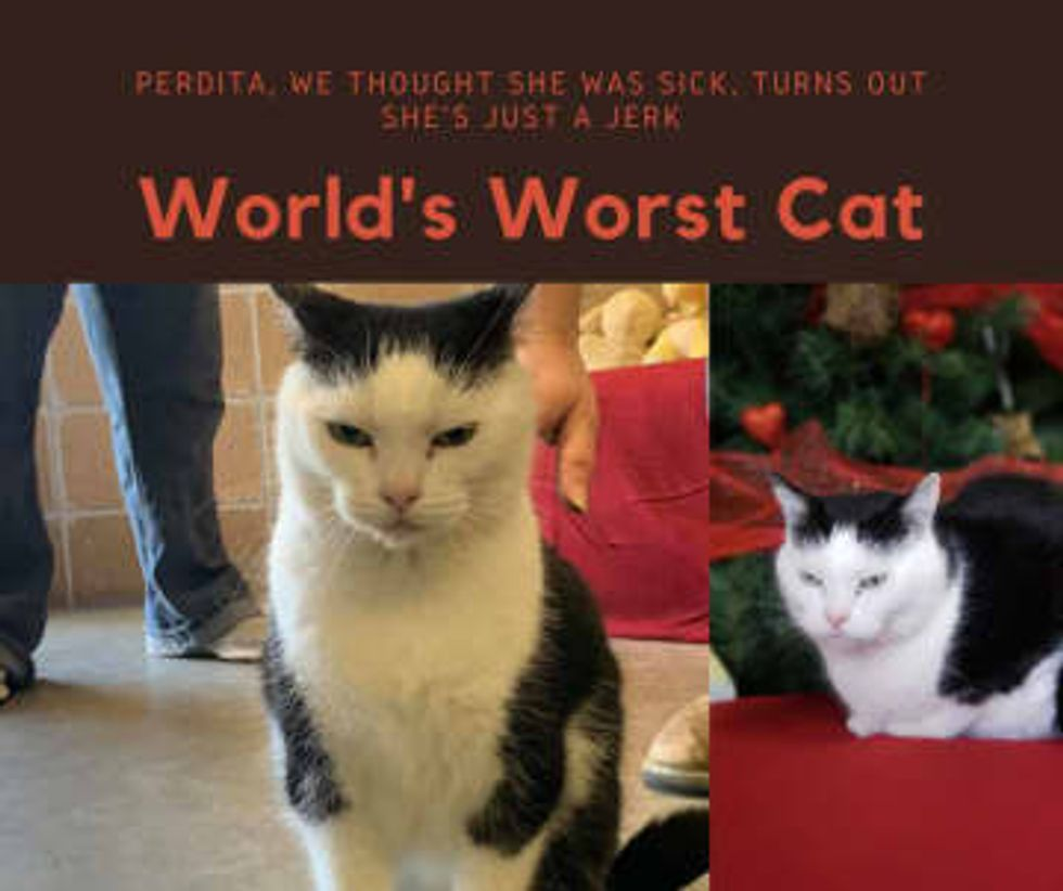 Adoption offers pour in for grouchy feline famously dubbed 'world's worst cat'