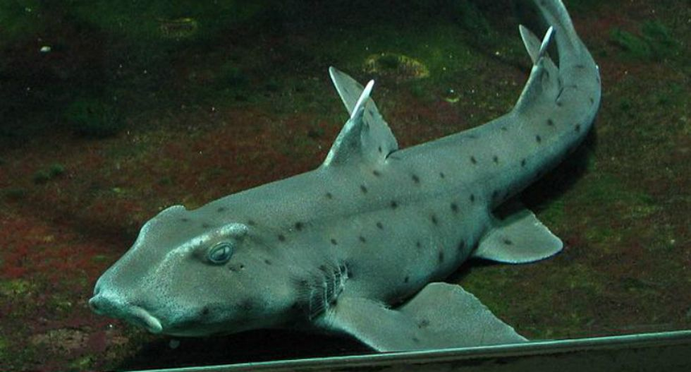 Shark likely to die after Texans steal it from San Antonio aquarium in a stroller