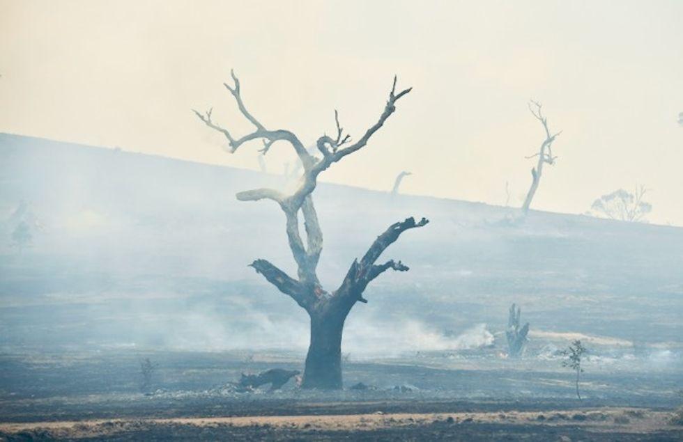 Rains 'breaking the back' of Australia bushfire crisis