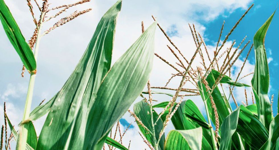 Trump administration weighs high-ethanol fuel waiver to placate farmers