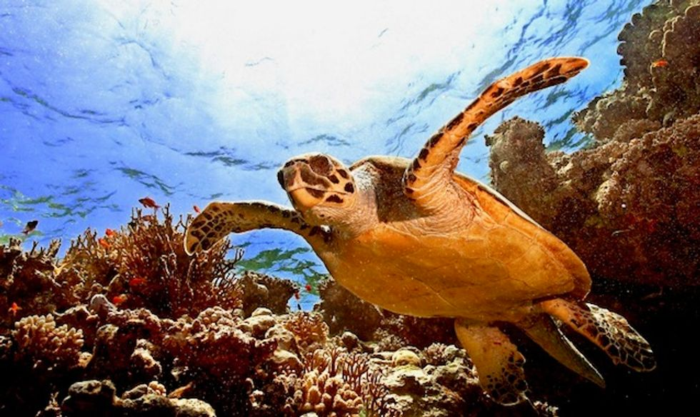 Climate change multiplies harmful marine heatwaves