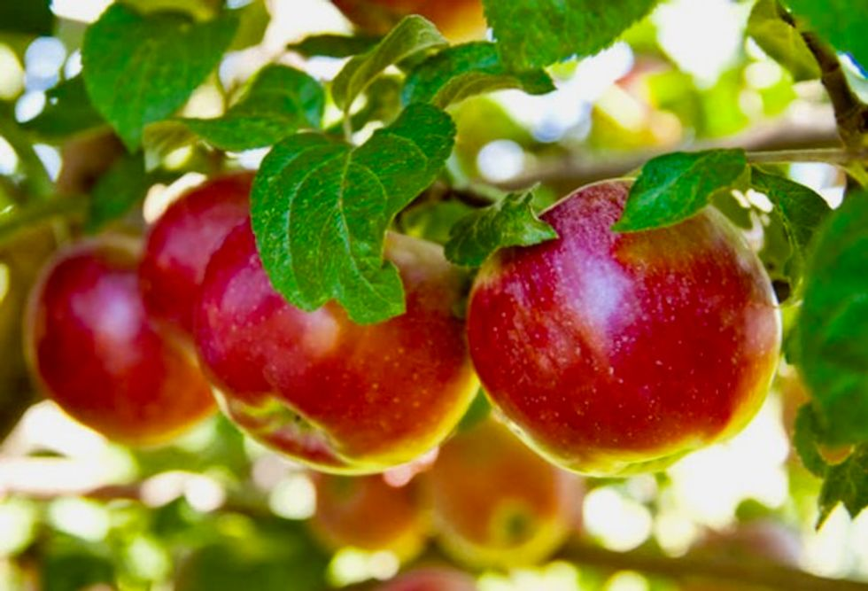 US apple farmers afraid they will be hurt by US-China trade battle