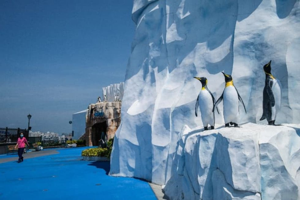 Hong Kong penguins chill during pandemic while carers work overtime