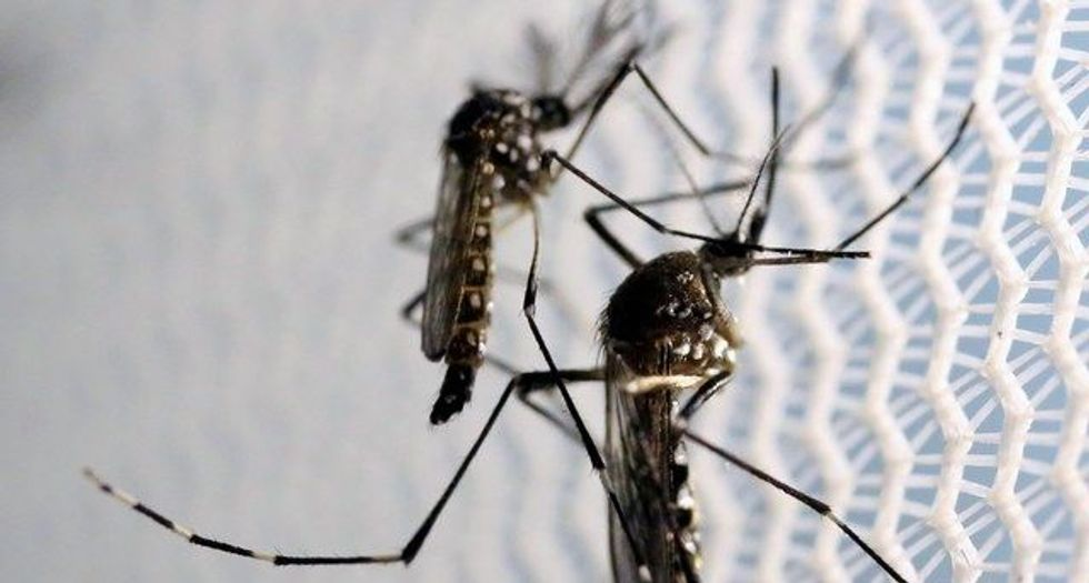 Microplastics may enter food chain through mosquitoes