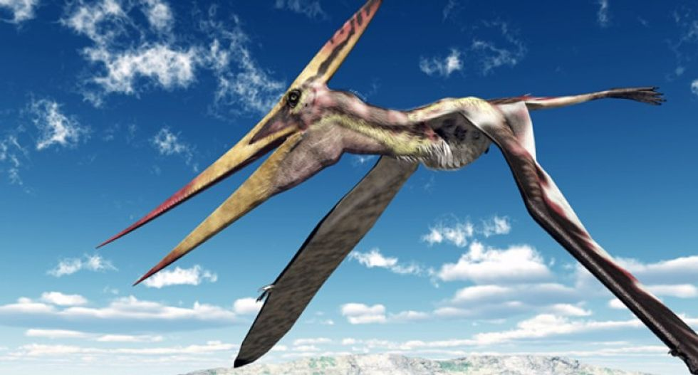 New pterosaur fossil reveals birds and small reptiles flew side by side