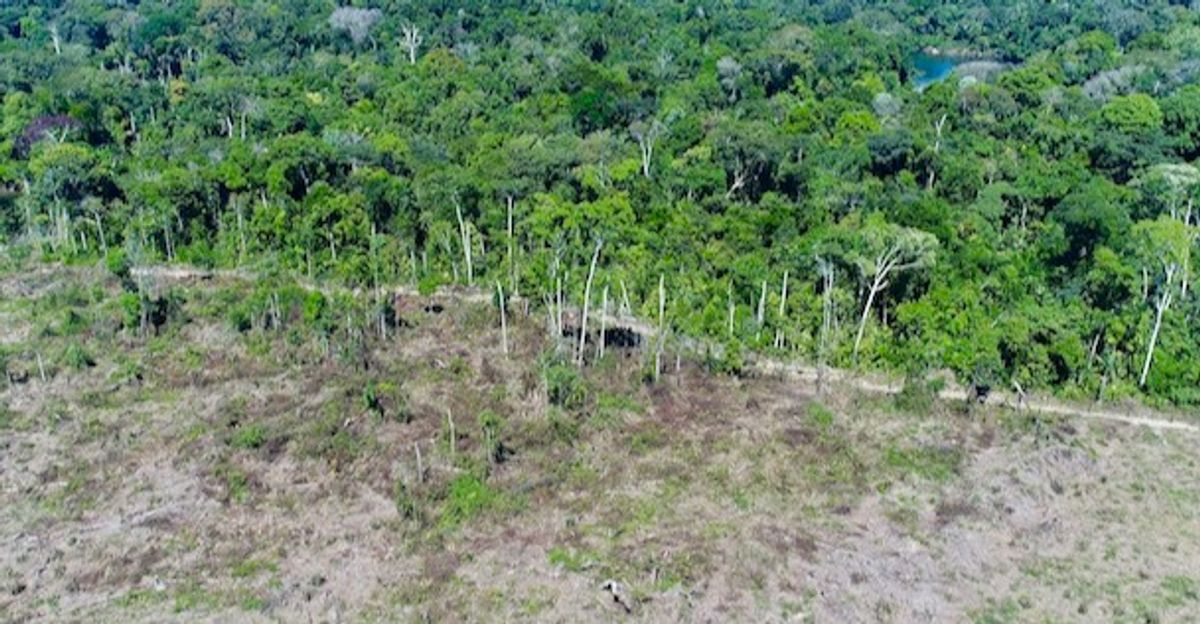 Since 2010, Amazon forest emitted more CO2 than it absorbed: study