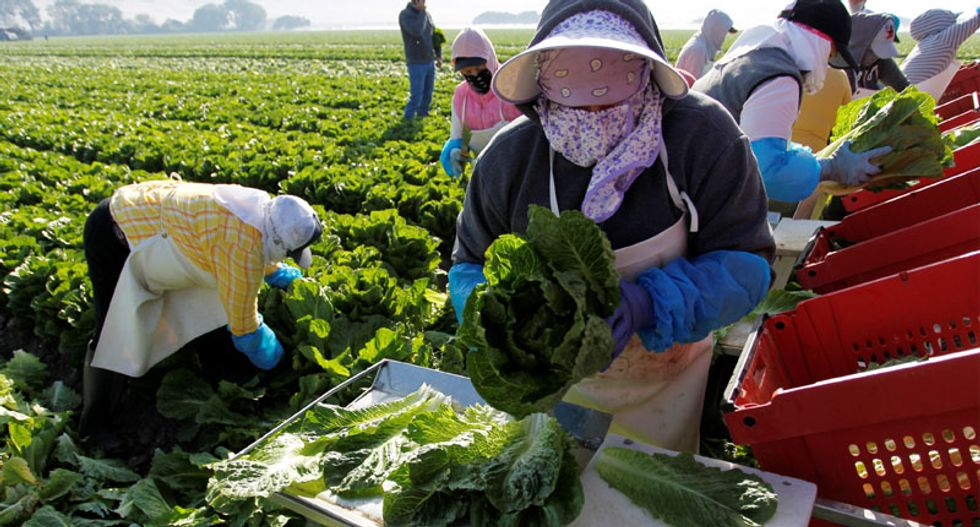 As Trump targets immigrants, US farm sector looks to automate