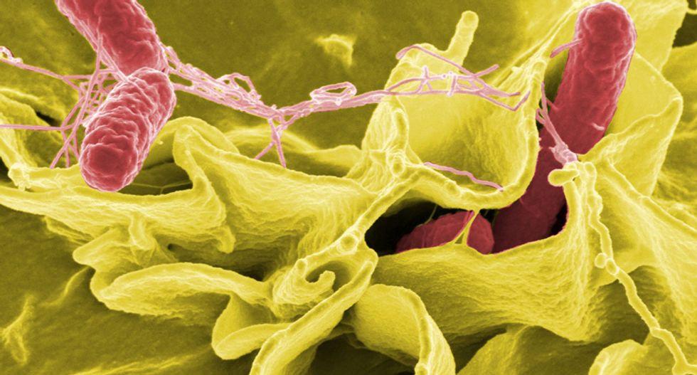 Genetically altered salmonella could be the next weapon against cancer: report