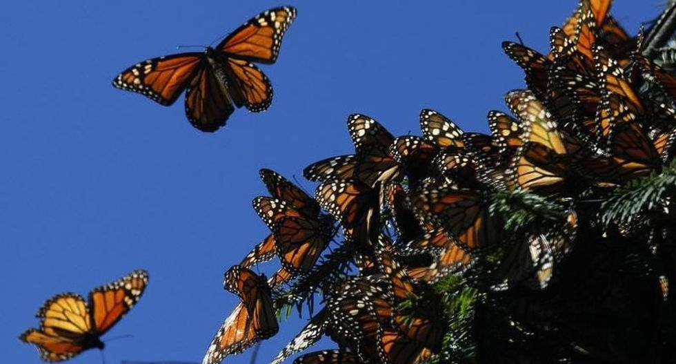 Death of a dynasty: west North America lost over 95% of its monarch butterflies in 35 years