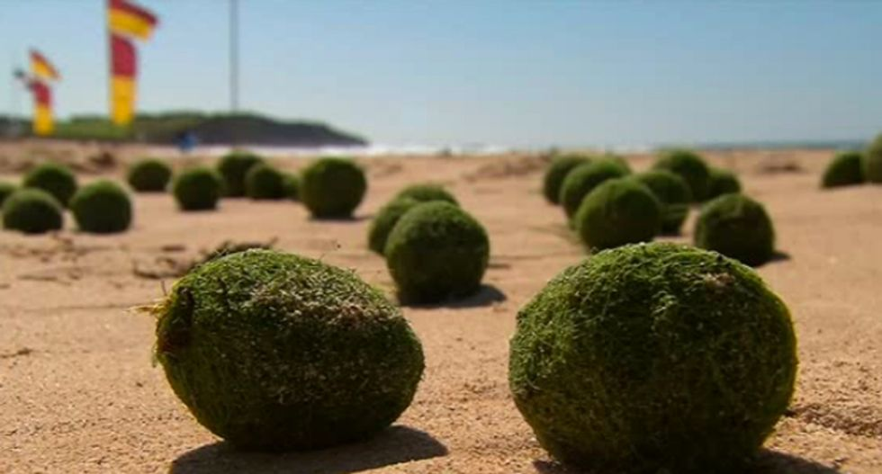Mysterious 'green aliens balls' more likely algae than UFO evidence, scientists say