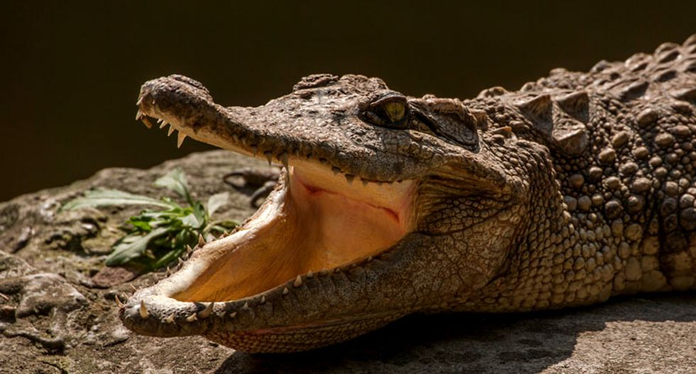 Crocodiles were once vegetarians, but it was just a phase