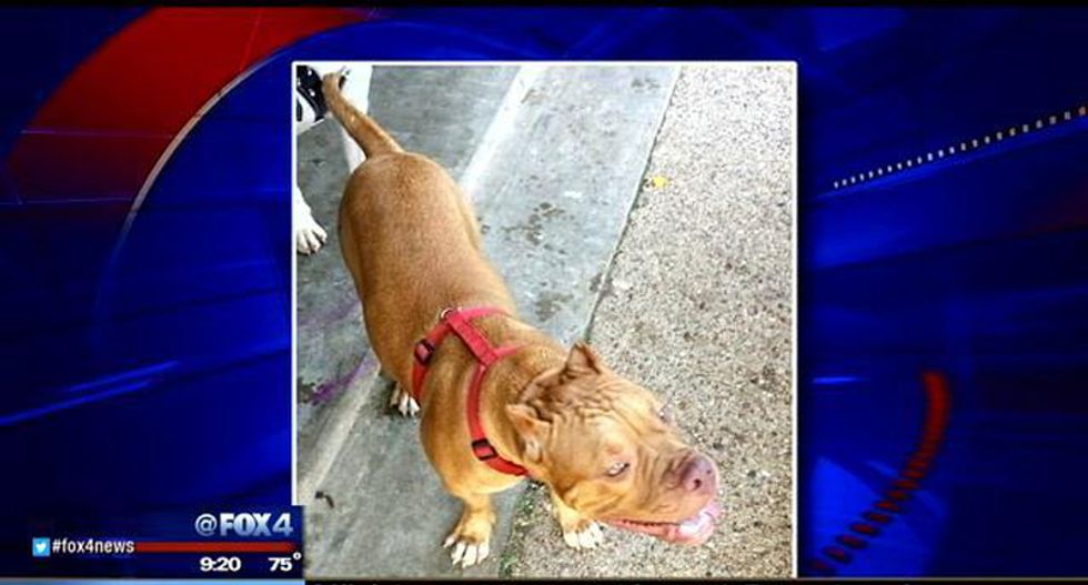 Texas police officer accused of luring pit bull with 'kissing noises' before shooting it