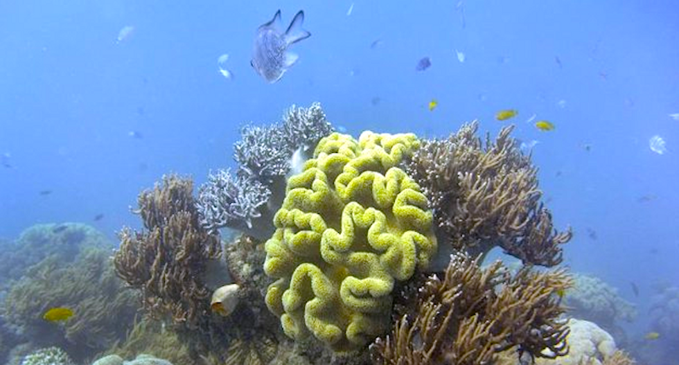 The Great Barrier reef corals are eating micro-plastic pollution -- and that's probably not a good thing