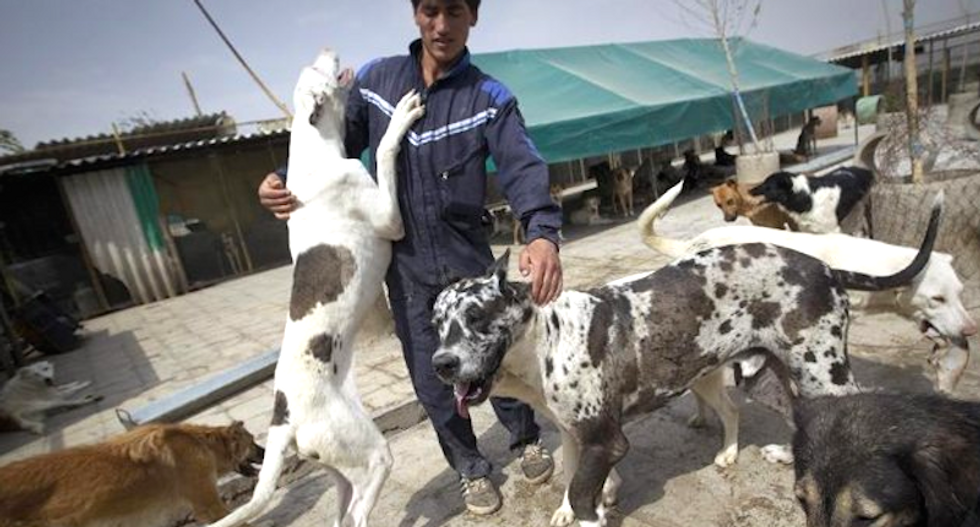 Dog lovers could face 74 lashes as Iran cracks down on pets in public
