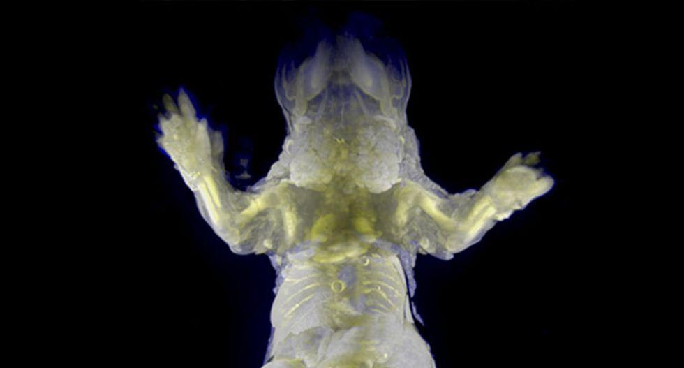 Japan scientists make see-through mice
