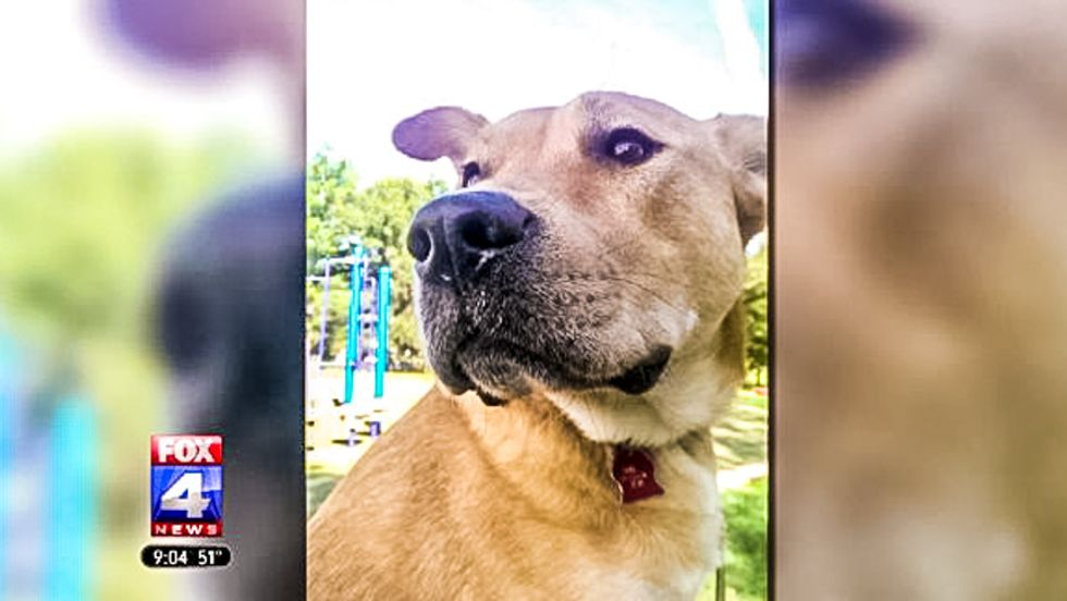 Missouri man charged after gunning down 14-year-old autistic girl's therapy dog