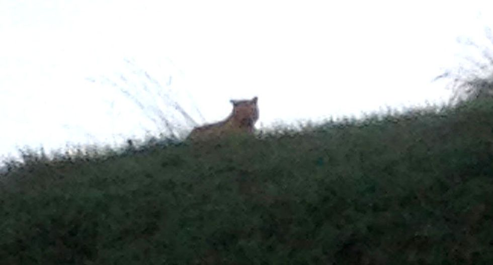 French police and firefighters hunt for tiger on the loose near Paris