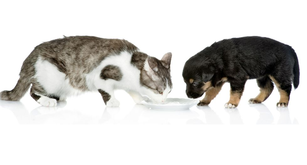 8 things you should never feed to dogs and cats