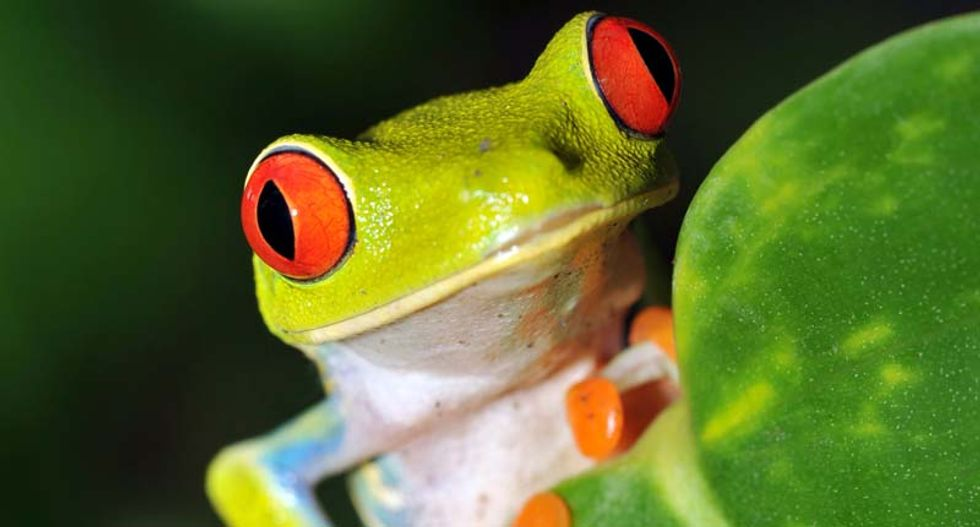 41% of amphibians may disappear as Earth faces sixth 'great extinction': study