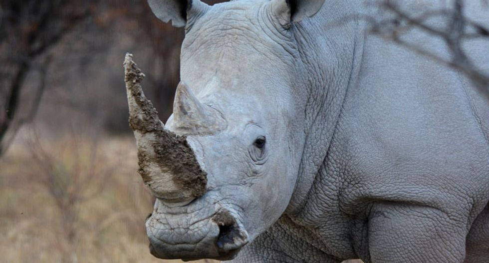 South Africa officials:  Rhino poaching running way ahead of last year's numbers