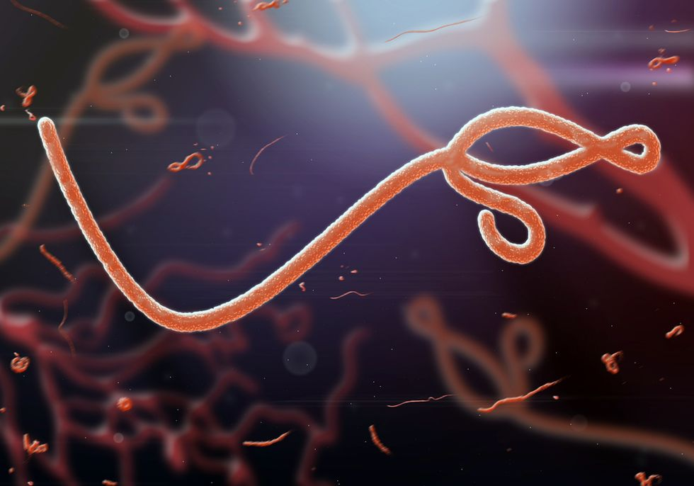 News about the success of a new Ebola vaccine may be too good to be true
