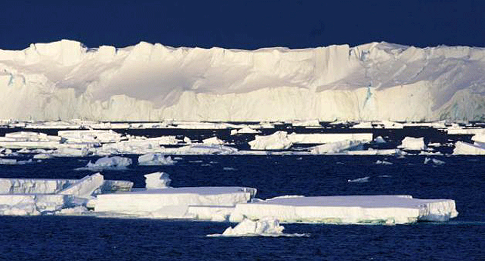 Antarctica once had a forest and researchers are trying to figure out why it disappeared